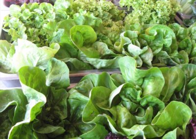 SEA-90 Green Vegetables
