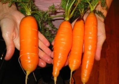 Nutrient Dense Carrots